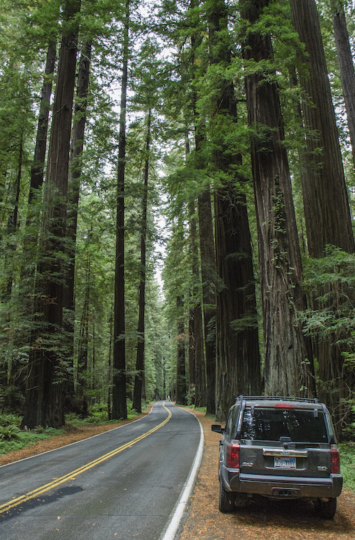 02_Redwood nationaal park - hoofdbaan