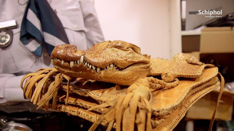 Krokodillen - die mogen dus niet mee (beeld: YouTube)